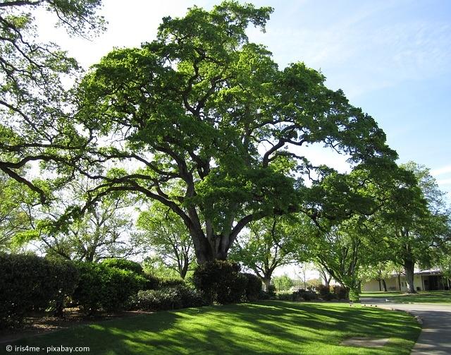 Die Eiche: Ein Baum mit Symbolkraft