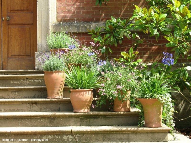 Pflanzkübel attraktiv bepflanzen